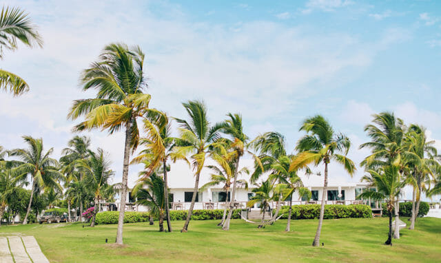 Palm Trees lined up at Cove Eleuthera resort in Bahamas