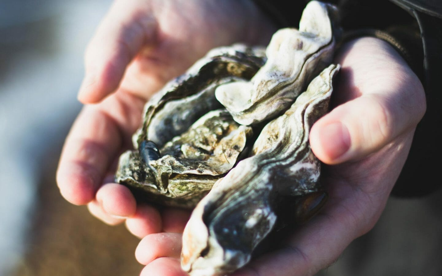 Oyster Conservation at Tides Inn